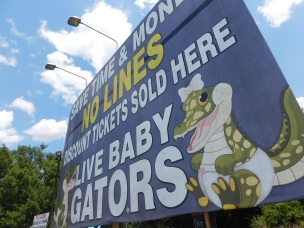 The baby gators are alive, not the 13 foot gator.